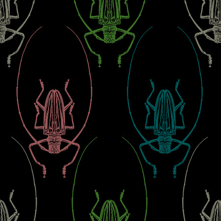 Beetle Harlequin. Color print on black background. Seamless pattern with insect. Sketch of bug. Realistic drawing. Vector illustration. Stock Illustratie