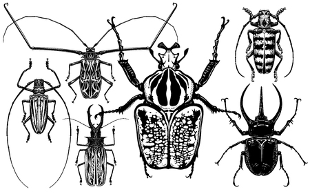 Insects set. Beetles isolated on white background. Goliath, Harlequin, rhinoceros beetle and others. Top view. Black and white sketch. Realistic drawing of bugs. Vector illustration. Çizim