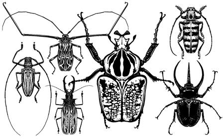 Insekten eingestellt. Käfer isoliert auf weißem Hintergrund. Goliath, Harlekin, Nashornkäfer und andere. Ansicht von oben. Schwarz-Weiß-Skizze. Realistische Zeichnung von Fehlern. Vektor-Illustration.