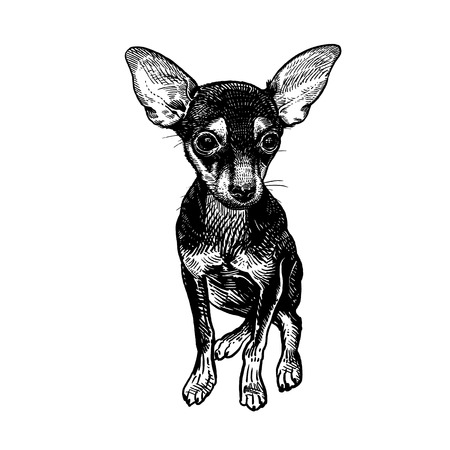 Cute puppy of terrier. Home pet isolated on white background. Sketch. Vector illustration art. Realistic portrait of animal in style vintage engraving. Black and white hand drawing of dog.