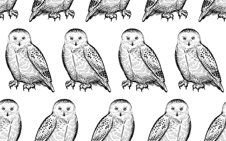 Seamless pattern with polar owls. Realistic birds. Vector illustration. Predatory forest birds. Sketch hand drawing. Black and white. Vintage. Template for the design of textiles, paper, wallpaper.