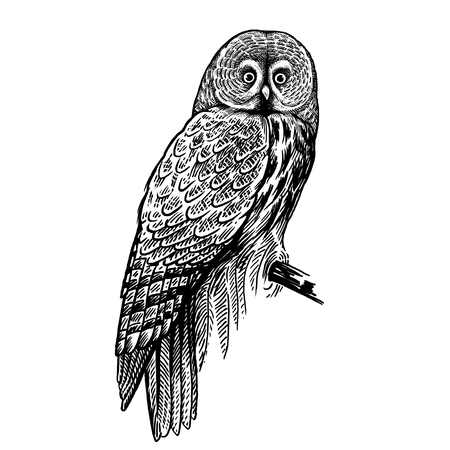 Owl. Realistic bird isolated on white background. Vector illustration. Predatory forest bird. Sketch hand drawing. Black and white. Vintage. Zdjęcie Seryjne - 122899759