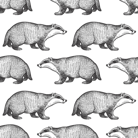 Badger or brock. Seamless pattern with forest animals. Hand drawing of wildlife. Vector illustration art. Black and white. Old engraving. Vintage. Design for fabrics, paper, textiles, fashion. Ilustração