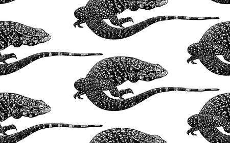 Lizards. Seamless pattern. Black and white reptile vector illustration. Hand realistic drawing. Vintage engraving. Illustration