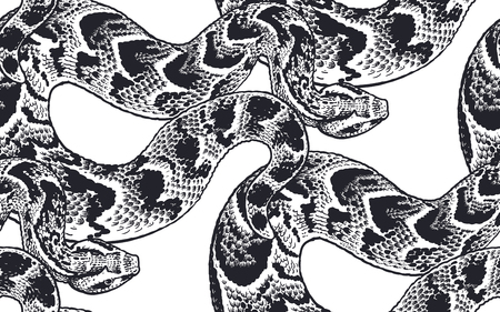 Snakes. Beast seamless pattern. Black and white reptile vector illustration. Hand realistic drawing. Vintage engraving.