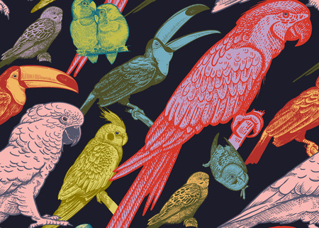Tropical birds. Parrots and toucans. Seamless vector background. Wildlife pattern. Retro vintage. Old engraving style. Pattern for paper, wallpaper, textile, Hawaiian shirts. Color birds on black.  イラスト・ベクター素材