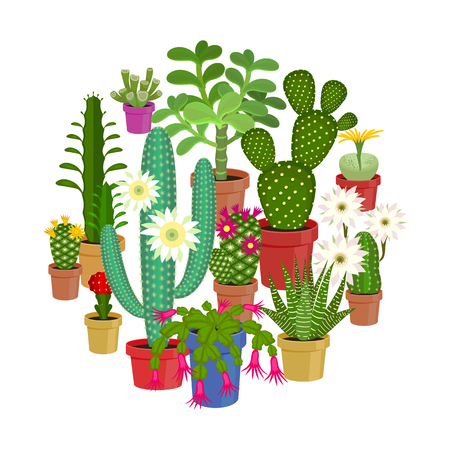 Vector illustration set of blooming flowers home cactus in pots isolated on white background.