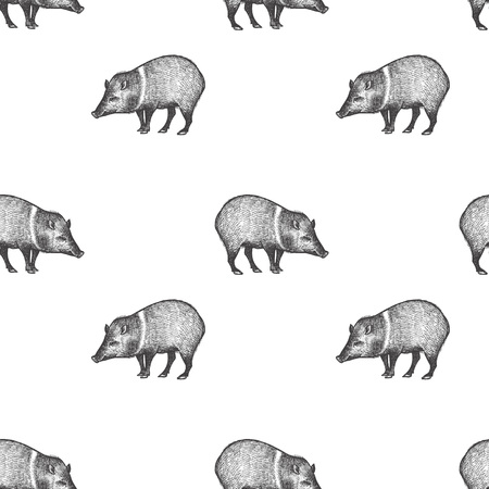 Peccary. Seamless pattern with animals South America. Hand drawing of wildlife. Vector illustration art. Black and white. Old engraving. Vintage. Design for fabrics, paper, textiles, fashion.