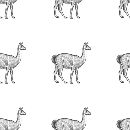 Guanaco. Seamless pattern with animals South America. Hand drawing of wildlife. Vector illustration art. Black and white. Old engraving. Vintage. Design for fabrics, paper, textiles, fashion.