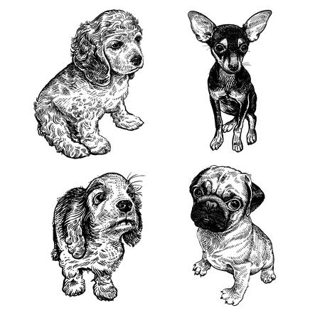 Lindos cachorros de terrier, spaniel y pug. Mascotas caseras aisladas sobre fondo blanco. Bosquejo. Vector. Retrato realista de animales en estilo vintage grabado. Dibujo de perros a mano en blanco y negro. Ilustración de vector