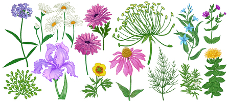 Garden flowers and herbs isolated on white background. Set of color flowers for decorative ornaments, patterns, design of greeting cards, covers, texts and more. Vector. Vintage.