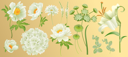 Garden flowers isolated on gold background. Peonies, lily, hydrangea, chamomile, asters and eucalyptus leaves. Set of white flowers for design of greeting cards and wedding invitations. Vector Vintage