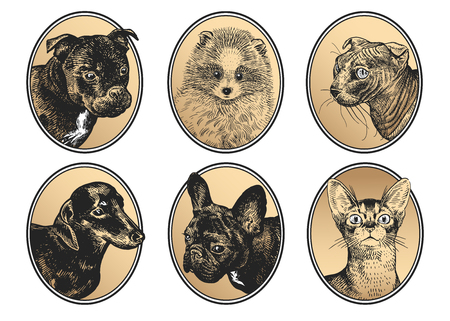 Dogs and cats. Portraits of pets in frame set. Bull Terrier, Dachshund, Spitz, Bulldog and sphinx cat. Black, white and gold foil. Vector illustration, sketch. Hand drawing of animals. Vintage.