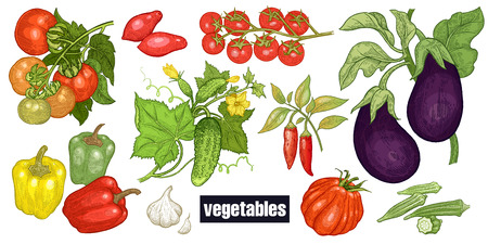 Various vegetables set. Tomatoes, cucumbers, eggplants, peppers, cayenne pepper, garlic, okra, cherry tomatoes. Hand drawing sketch. Red, green and white. Vector illustration art. Vintage engraving.  イラスト・ベクター素材