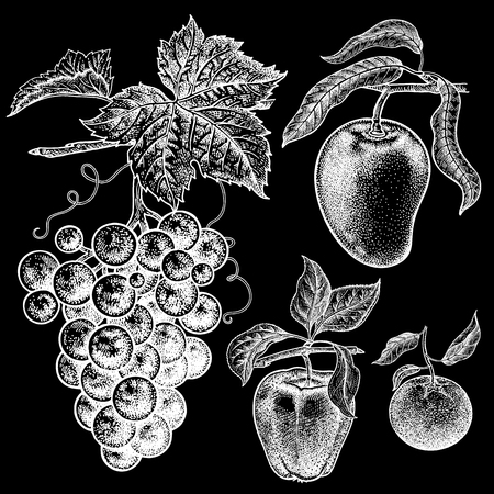 Apple, mango, mandarin, grapes. Realistic vector illustration plant. Hand drawing berries and fruit, isolated. Decoration for products health and beauty. Vintage. White chalk on black board. Illustration