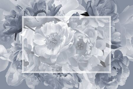 Vintage floral card. Garden flowers peonies and place for inscription. Template for business cards, covers, packaging, advertising poster, interior decoration and other. Black and white
