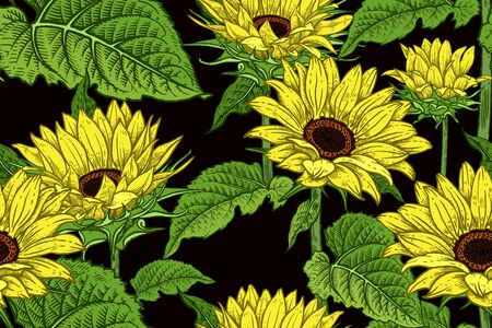 Sunflowers. Floral seamless pattern. Flowers and leaves. Vector illustration. Vintage. Hand realistic drawing. Decorative background to create paper, wallpaper, summer textile.  イラスト・ベクター素材