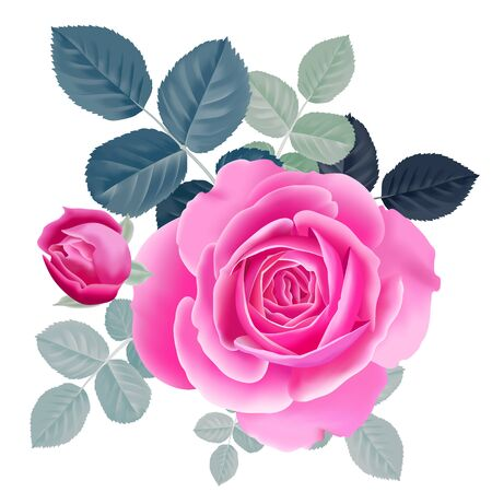 Pink rose. Isolated bouquet garden flower on white background. Realistic vector illustration art. Decoration for packaging products for beauty and health, cosmetics, flower shops and markets. Vintage. Ilustração