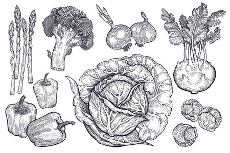 Vegetables isolated set. Cabbage, kohlrabi, brussels sprouts, broccoli, peppers, onions, asparagus. Hand drawing black and white. Vector illustration art. Vintage engraving.