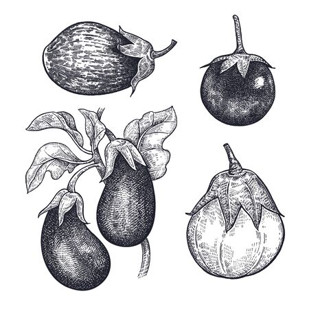 Eggplants. Hand drawing of vegetable. Vector art illustration. Isolated image of black ink on white background. Vintage engraving. Kitchen design.
