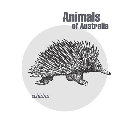 Echidna hand drawing. Animals of Australia series. Vintage engraving style. Vector art illustration. Black graphic isolate on white background. The object of a naturalistic sketch. Vecteurs
