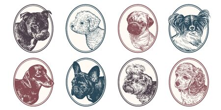 Portraits of animals in frame set. Pet dogs and puppies. Bull Terrier, Dachshund, Spitz, Bichon Frize, Yorkshire Terrier, Pug, Spaniel, Papillon and Bulldog. Vector illustration, sketch. Hand drawing.