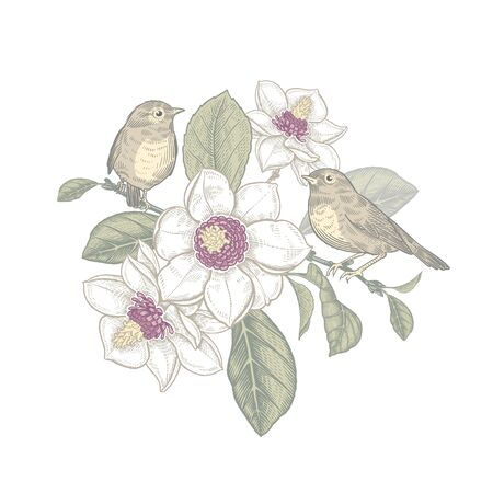 Two little cute birds on tree branch of blossoming magnolia. Spring vector illustration with flowers, leaves and animals. Spring time. Vintage decoration for love message, wedding invitation, interior