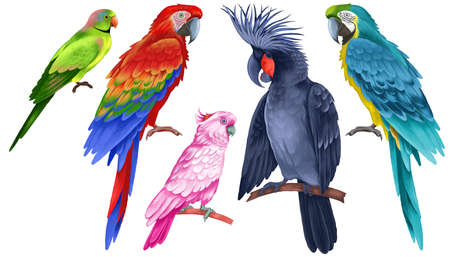 Exotic birds set. Multicolored beautiful parrots isolated on white background. Realistic illustration. Wildlife Animal Image. Cockatoo, macaw, ara and other birds. Tropical fauna. 写真素材
