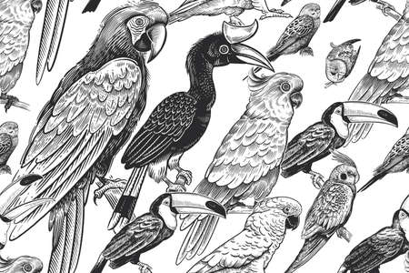 Black and white summer tropical pattern. Exotic birds parrots and toucans. Animal background. Wild world. Vintage design for Hawaiian shirts, paper, wallpaper, textiles, interior. Vector illustration