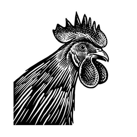 Rooster head closeup isolated on a white background. Domestic bird. Farm animals series. Vector illustration of poultry. Black and white graphics. Vintage sketch of cock.