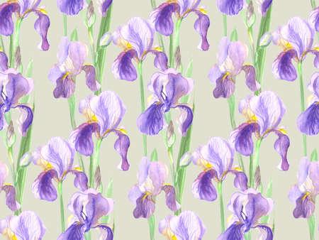 seamless pattern of iris flowers watercolor 版權商用圖片