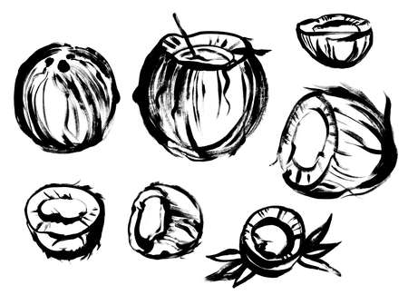 coconut in a set of black paint drawing with a dry brush