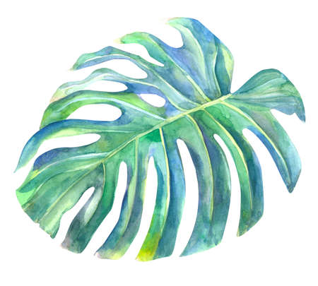 natural green monstera leaf painted with watercolors
