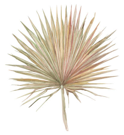 dry palm leaf painted with watercolor dried flowers isolated