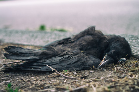 Dead bird on the ground Banque d'images