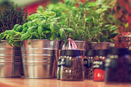 potted: Potted kitchen herbs
