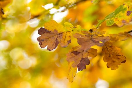 Yellow and orange fall foliage, leaves