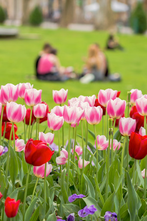 Blurred group of young urban people sitting on a grass on Zrinjevac square in Zagreb, Croatia with pink tulips in a foreground