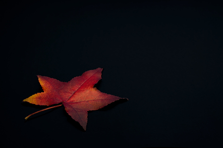 Bright and colorful autumnal colored leaf on a black background