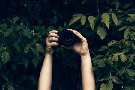 Womans hands holding camera and snapping photos hidden in the bushes Stock Photo
