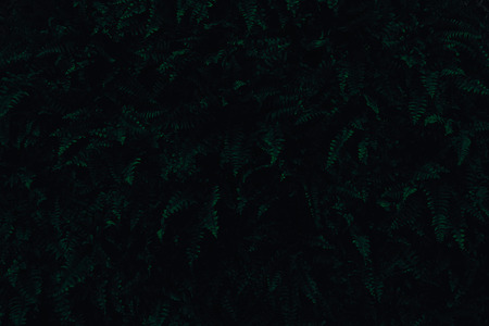 Dark green fern leaves filling the frame, night and darkness concept
