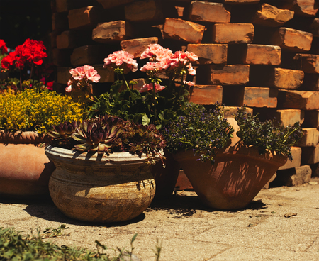 Potted plants on a summer day in garden in front of brick wall