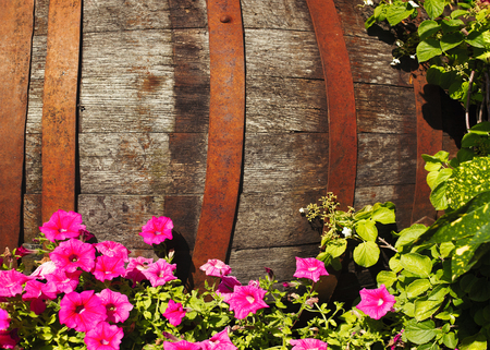 Old wooden barrel in the garden, surrounded with pink flowers Stock Photo - 102990699