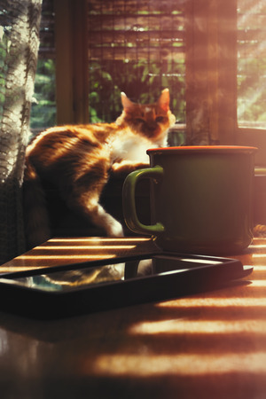 Hot cup of coffee and cell phone on the table with warm morning sunlight coming from window, with yellow cat laying on the windowsill Stock Photo - 105940016