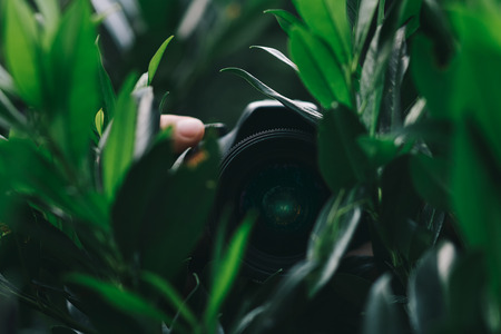 Person hidden in garden leaves holding camera and taking paparazzi shots, spynig on people Stock Photo