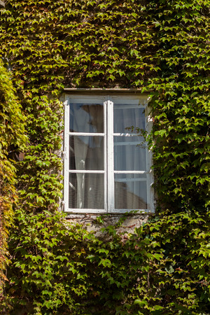 White window on a building completely covered in ivy