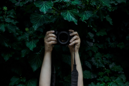 Womans hands holding camera and snapping photos hidden in the dark ivy leaves