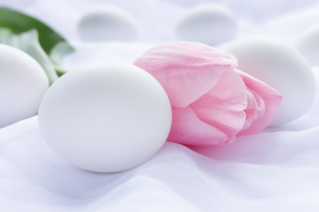 White Easter eggs and pink tulip laying on white fresh linen Stock Photo