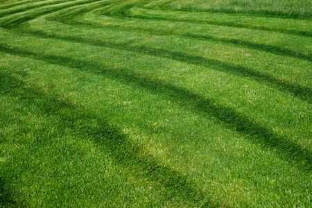 Striped pattern on a freshly cut grass field 스톡 콘텐츠