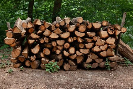 Pile of firewood, logs stacked in the forest